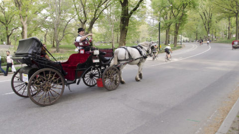 Horse-Drawn-Carriage-IN-CENTRAL-PARK
